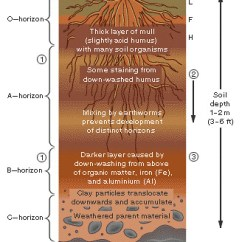 Deciduous Forest Layers Diagram Ford 8n Kaufen Soils I - A Gallery On Flickr