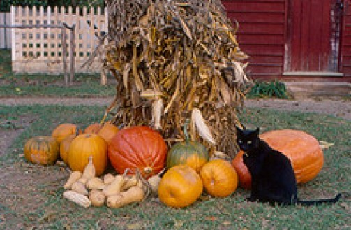 Looking for a natural way to help sooth your cat's stomach? Keep reading to learn about the benefits of pumpkin as a holistic remedy for digestive problems.