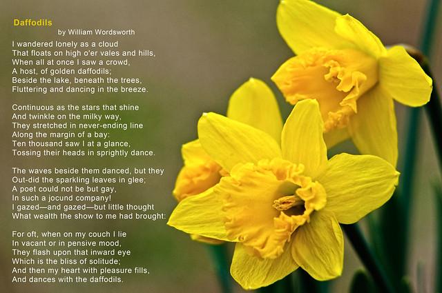 Image result for daffodils wordsworth