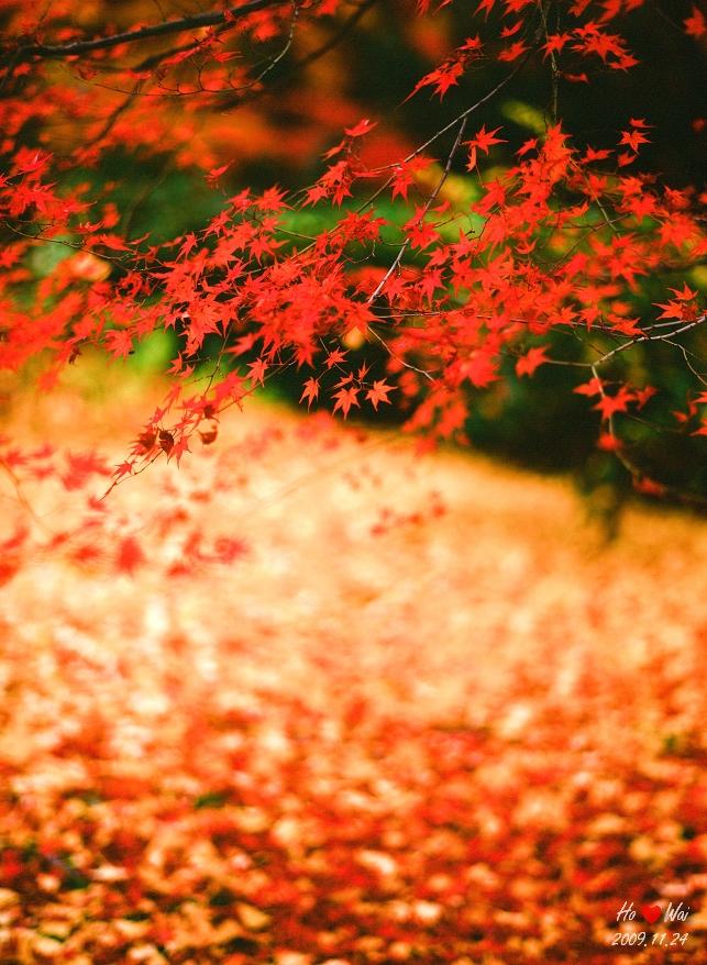1124_kyoto_1011F