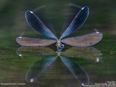Dragonfly, by National Geographic