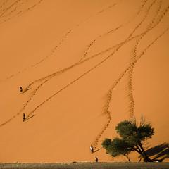 Desert - Sand Dune in Africa - Sossusvlei, Namibia - Dune 45