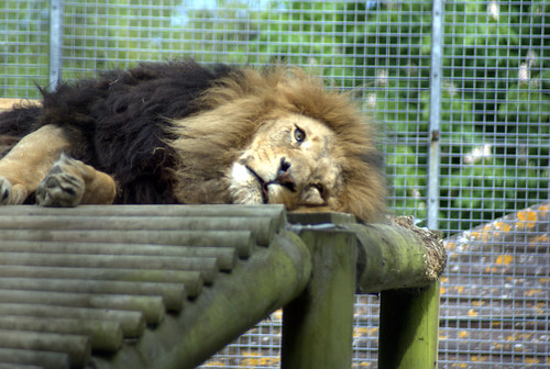 Some and checkout the animals at Newquay Zoo.