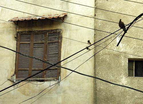Telgrafın tellerini kurşunlamalı... by Emine Okumuş