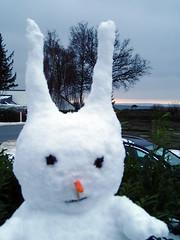 Schneehase Annabelle