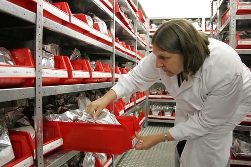 ILRI forage genebank: Examining seed