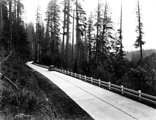Wooded road, Washington