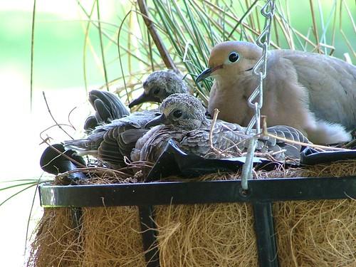 Nesting Dove