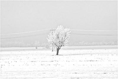 """ Winter_Light_Hiver_Lumiere """