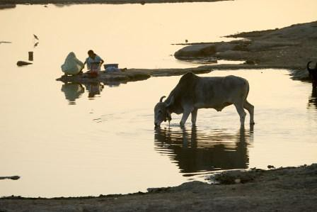 Women washing and cow drinking in Rajasthan compressed