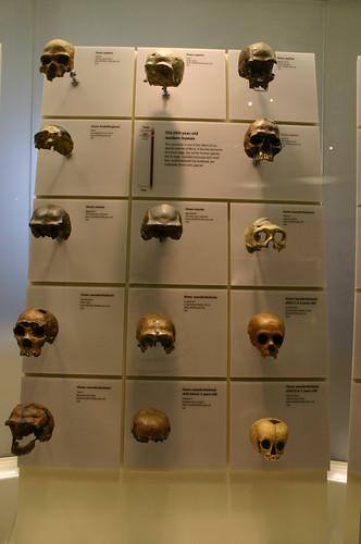 Skulls of our Ancestors