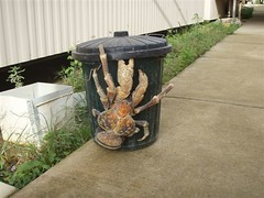 Coconut crab. . .