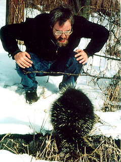 Dave exchanges threat displays with a porcupine