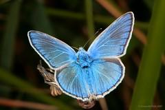 Butterfly, by Fernando Peon