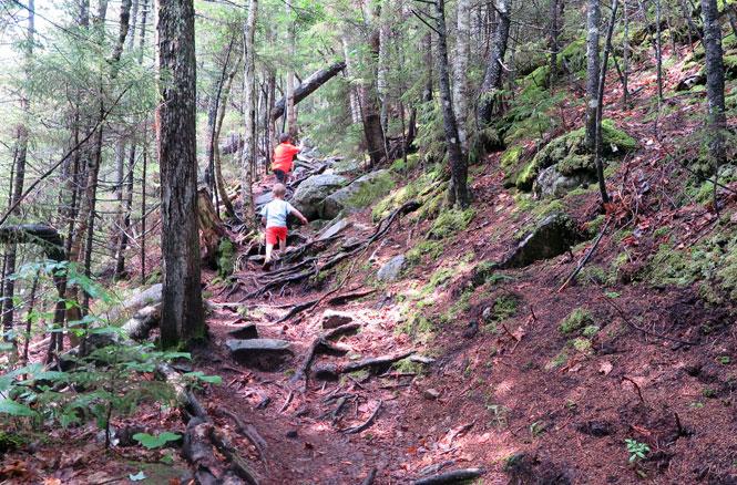 Bemis Brook Trail