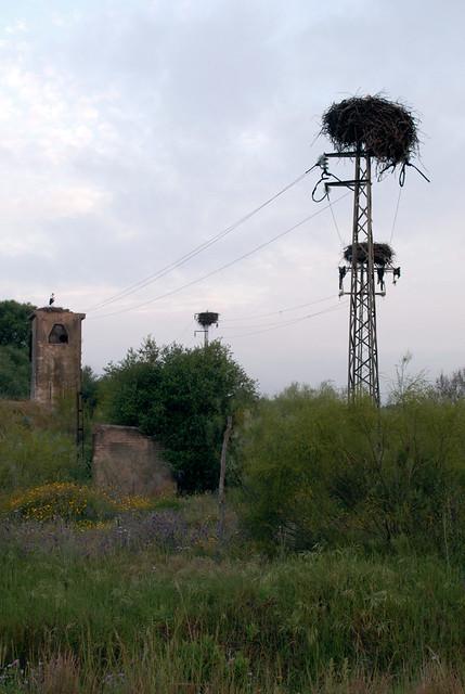 Nido de cigüeñas en la gravera abandonada de la Dehesa de Abajo