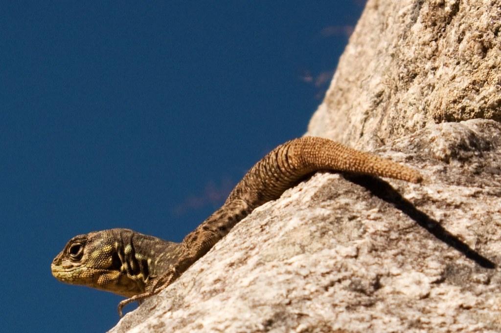 a new friend in Machu Picchu 2010