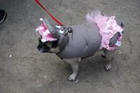 Hippo Dog | Flickr - Photo Sharing!