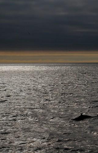 Cosa fare in Islanda: vedere le balene