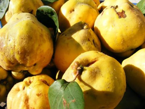 Quince-Fruit_13885-480x360