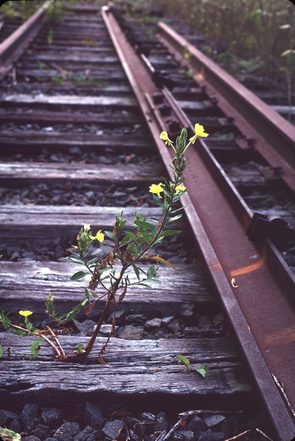 Albany County Rail Trail: The Railsplitter