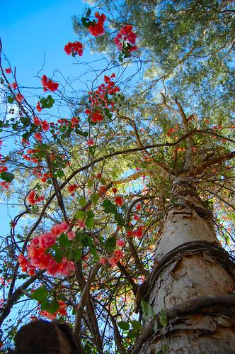 dream tree 13