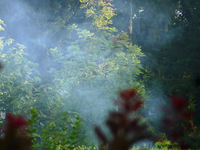 Smoke screen from neighbour's grill