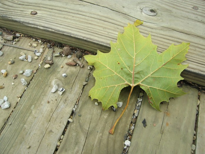 A leaf on the deck