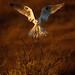 Angel Landing