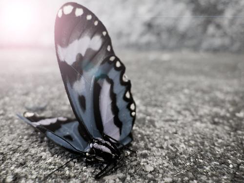 sick butterfly