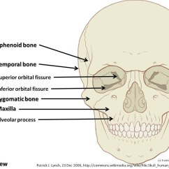Axial Skeleton Skull Diagram Blank Medical Fishbone Head Great Installation Of Wiring Manual E Books Rh 62 Fommunity De Back