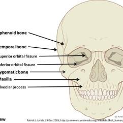Skeleton Diagram With Labels 1998 Honda Civic Hatchback Radio Wiring Skull Diagram, Anterior View Part 2 - Axial Visual Atlas, Page 7 | Flickr ...
