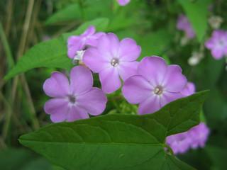 Roadside flowers 2010