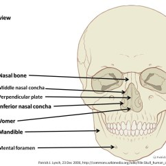 Skeleton Diagram With Labels Schematic Wiring Skull Anterior View Part 3 Axial