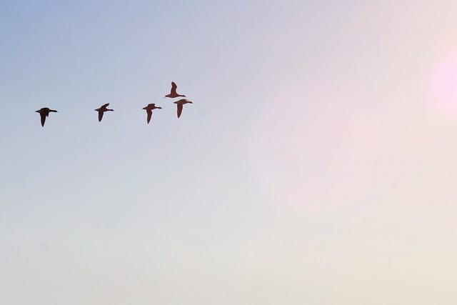 poem about birds