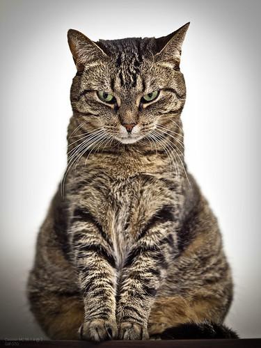 Cat Nisia by Cosinon MC 55 1.4