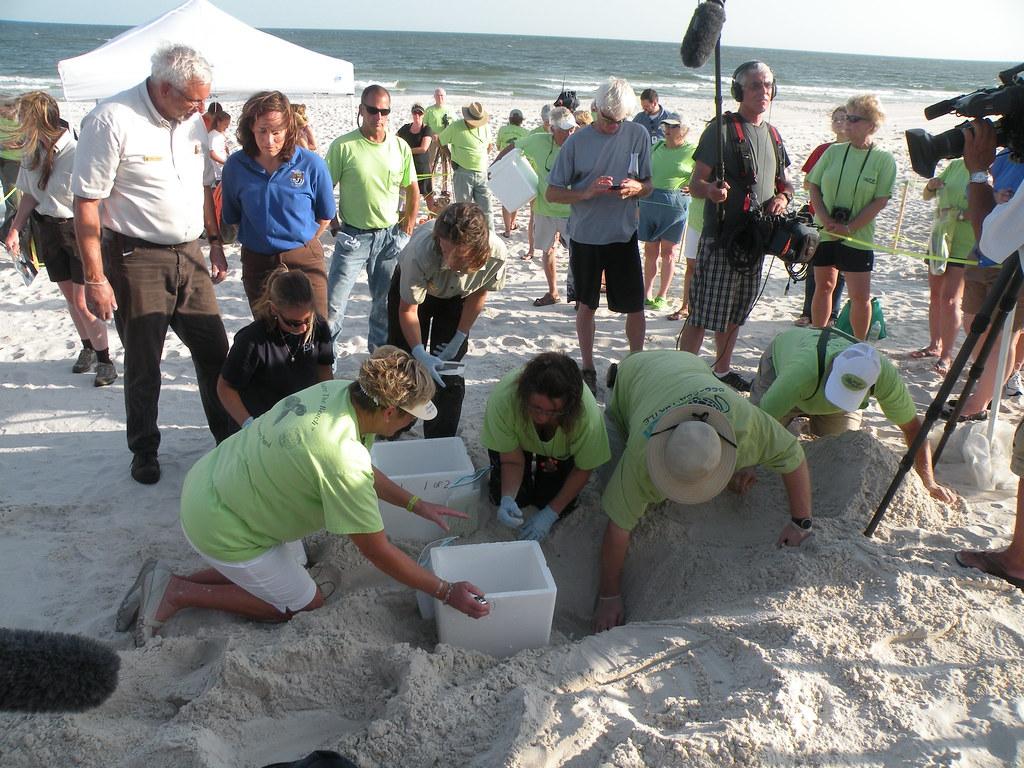 Sea Turtle Nest Transfer Extravaganza...