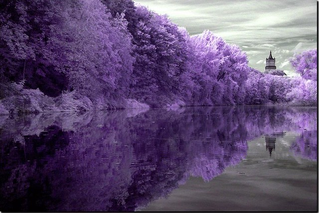 Purple and gray inspiration  a gallery on Flickr