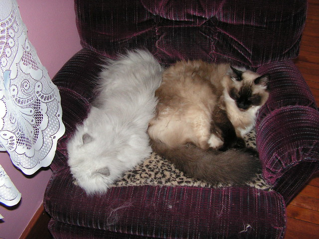 Merlin and Tantra Share a Chair