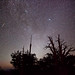 Perseid Meteors over Bristlecone Pines