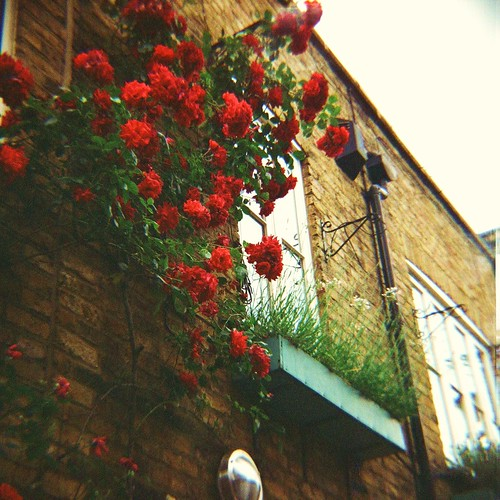 Roses and Bricks