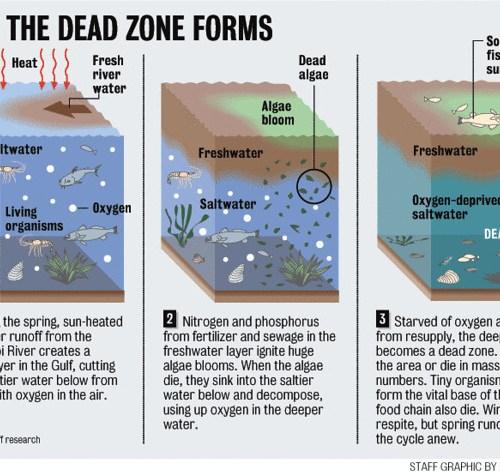 How dead zones form