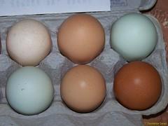 Farmer's Market Eggs
