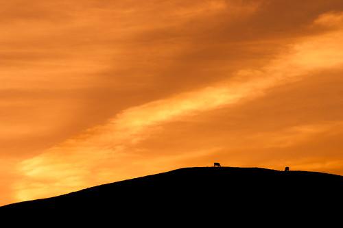 Crop Rotation (Sunset & Cows), Dorset