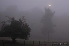 Full moon in a fog