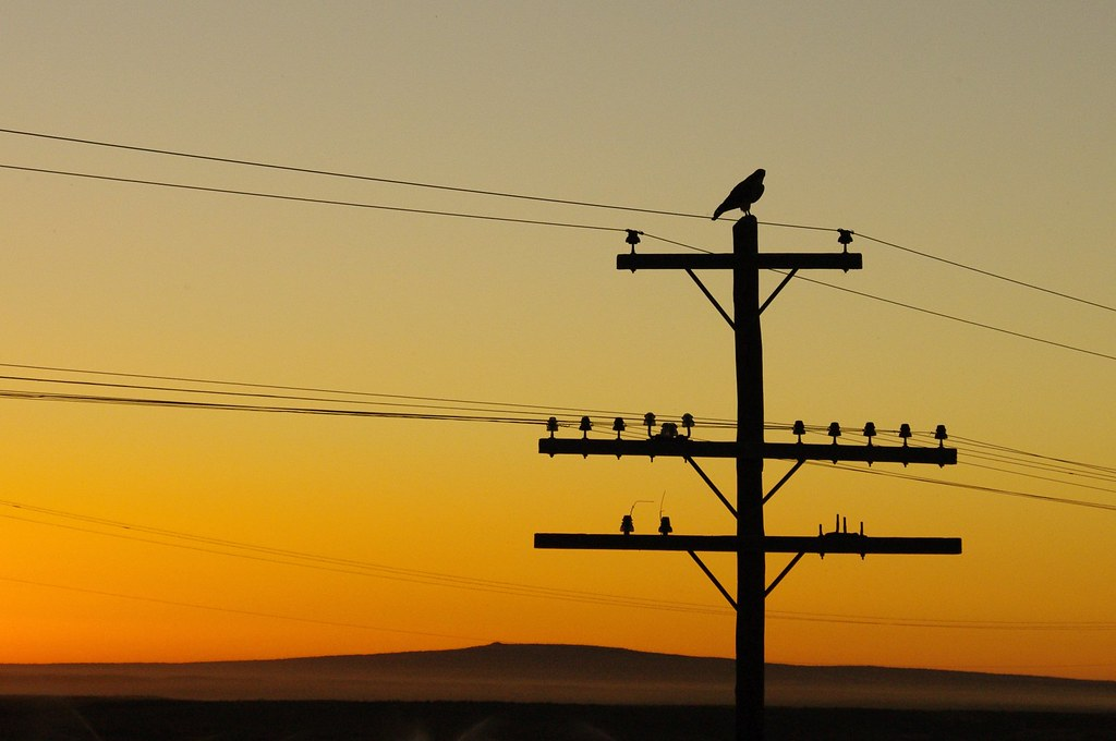 hawk on powerline with sun setting in the background