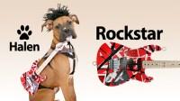 Halen's Rock Star Halloween Costume