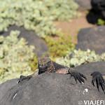 Viajefilos en La Espanola, Galapagos 027