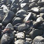 Viajefilos en La Espanola, Galapagos 013