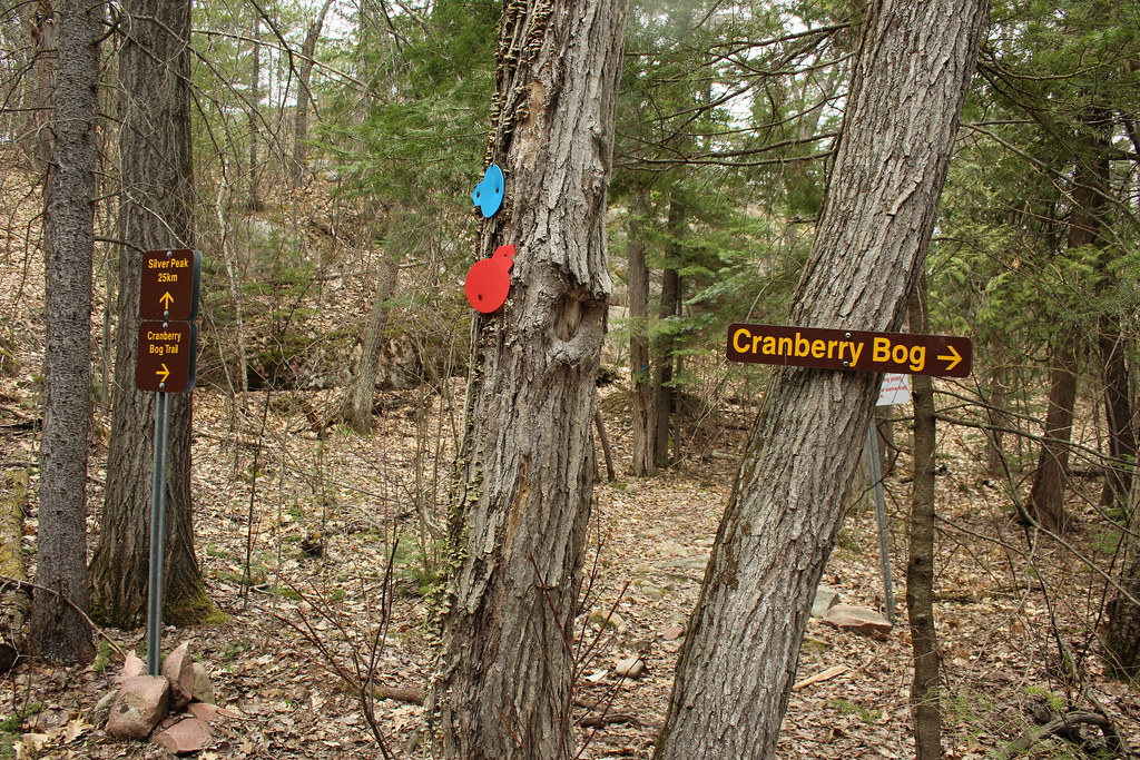 Cranberry Bog 07